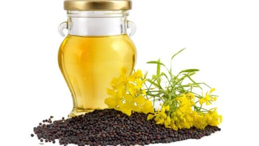 Controlling Moisture in the Rapeseed Oil Extraction Process